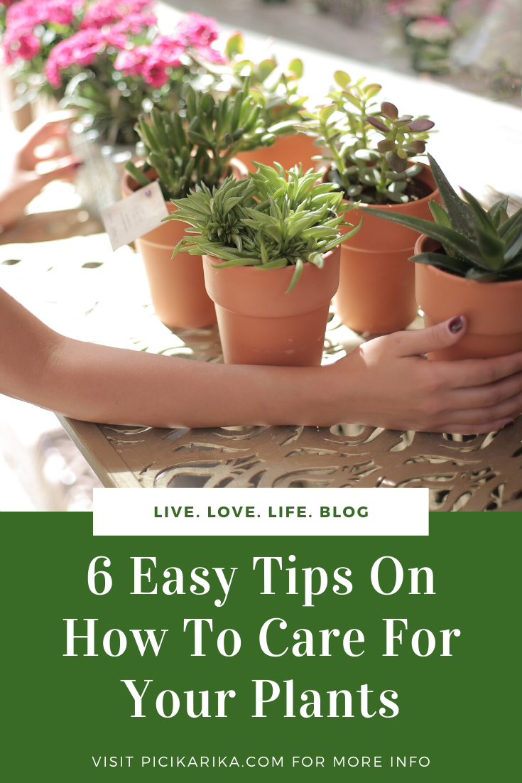 6 Easy Tips On How To Care For Your Plants
